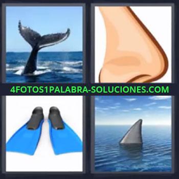 4 Fotos 1 Palabra - seis-letras cola de ballena nariz, aletas de buceo, tiburón