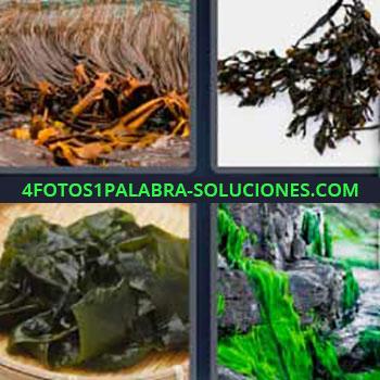 4 Fotos 1 Palabra - siete-letras hojas mojadas. Hierbas. Plantas húmedas. Agua verde.