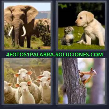 4 Fotos 1 Palabra - ocho-letras elefante perro y gato, Ovejas, Ardilla