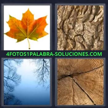 4 Fotos 1 Palabra - siete-letras hoja, Corteza, Ramas y cielo, Tronco