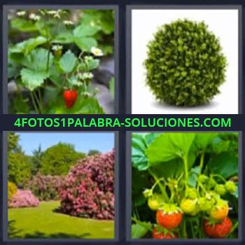 4 Fotos 1 Palabra - cinco-letras fresas planta, Jardin, Plantas con frutos.