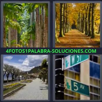 4 Fotos 1 Palabra - cinco-letras bosque calle. Camino con árboles. Calle con árboles. Señales de calles.