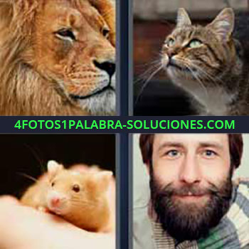 4 Fotos 1 Palabra - seis-letras león gato. Rata o ratón. Hombre con barba.