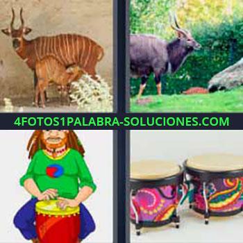 4 Fotos 1 Palabra - seis-letras cabra con cuernos. Venados. Antílope africano. Dibujo hombre tocando el tambor. Tamboriles.