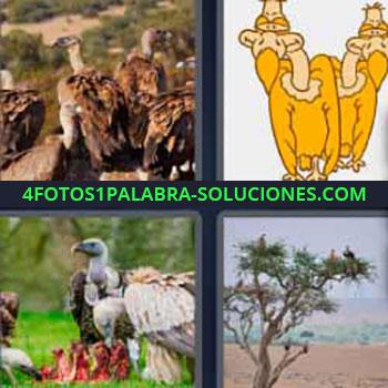 4 Fotos 1 Palabra - cinco-letras cuatro aves. Parecidas a Águila. Halcón. Buitre.