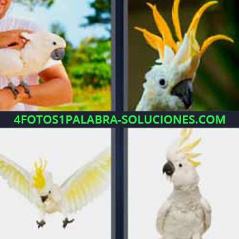 4 Fotos 1 Palabra - seis-letras loro. Pájaro blanco con cresta amarilla. Papagayo. Cotorra. Guacamayo. Ave tropical.