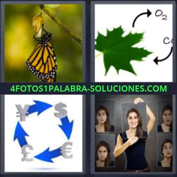4 Fotos 1 Palabra - cuatro-letras mariposa hoja, Dibujo hoja O2 por CO2, Divisas o diferentes monedas, Chica con diferentes imágenes.