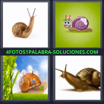 4 Fotos 1 Palabra - seis-letras cuatro caracoles, Insectos, Bichos, Animales, Gasterópodo