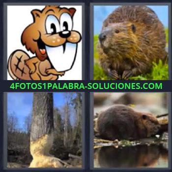 4 Fotos 1 Palabra - seis-letras animales, Dibujo animal diente blanco, Tronco roído desgastado mordido