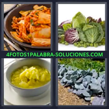 4 Fotos 1 Palabra - cinco-letras lechugas, Comida preparada, Plato de comida, Huerto verduras plantadas.