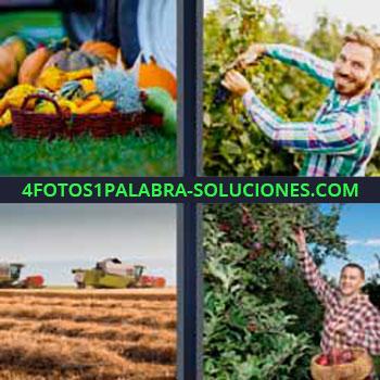 4 Fotos 1 Palabra - cuatro-letras canasta de frutas. Hombre podando. Máquinas en el campo de cultivo. Señor recogiendo frutas de los arboles.