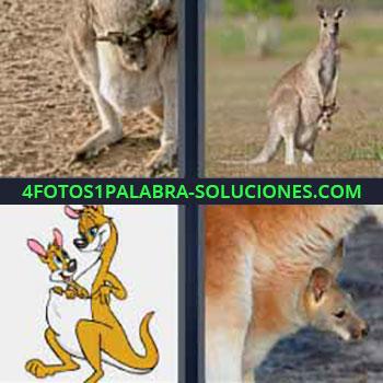 4 Fotos 1 Palabra - siete-letras canguros. Marsupiales. Mama y bebe canguro.