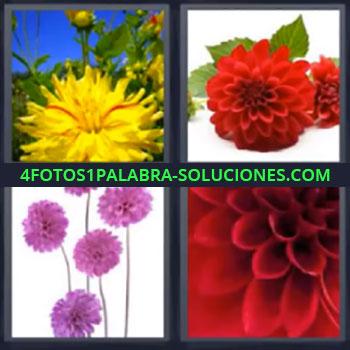 4 Fotos 1 Palabra - siete-letras flores, Flor amarilla, Flor roja, Flor rosa