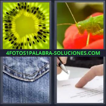4 Fotos 1 Palabra - cuatro-letras kiwi grillo, Saltamontes verde, Tela vaquero o jeans, Dedo y bolígrafo escribiendo.