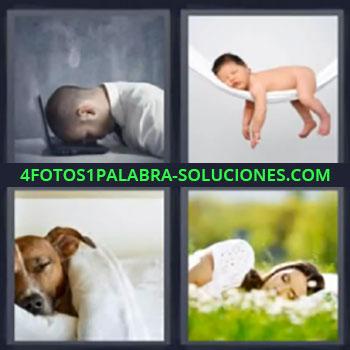 4 Fotos 1 Palabra - seis-letras cabeza encima computadora, bebé, Hombre con cabeza sobre ordenador, Bebe dormido en hamaca blanca, Perro dormido, Mujer durmiendo sobre hierba.