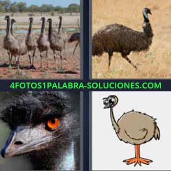 4 Fotos 1 Palabra - seis-letras avestruz. Ave grande que camina. Pájaros parecidos a un avestruz.