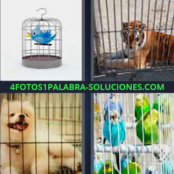 4 Fotos 1 Palabra - pájaro en jaula. Tigre en barrotes. Perro blanco pequeño. Loros o periquitos.