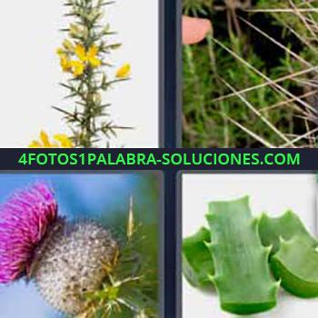 4 Fotos 1 Palabra - seis-letras cactus. Plantas que pinchan. Flor rosa de cactus. Aloe.