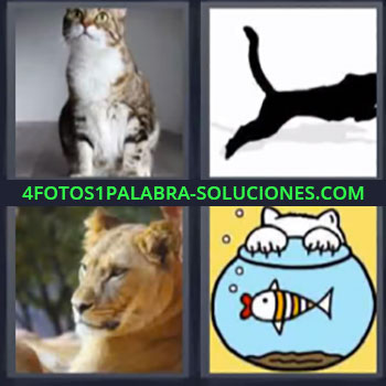 4 Fotos 1 Palabra - seis-letras gato. Dibujo animal corriendo. Leona o león. Dibujo gato cazando en pecera.