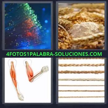 4 Fotos 1 Palabra - seis-letras cereales, Filamentos ópticos, Brazos musculatura, Granos