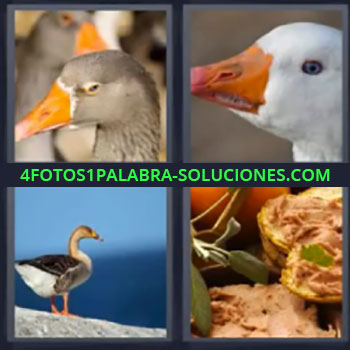 4 Fotos 1 Palabra - siete-letras aves, Pajaros, Patos, paté, ocas, ganso