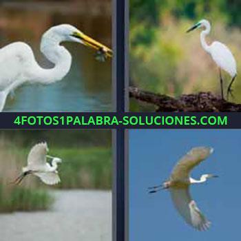 4 Fotos 1 Palabra - ocho-letras flamenco con algo en el pico. Cigüeña. Pájaro blanco. Ave. Gaviota volando.
