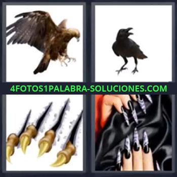 4 Fotos 1 Palabra - siete-letras aguila, Pajaro, Uñas animal desgarrando, Uñas largas negras