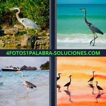 4 Fotos 1 Palabra - seis-letras ave negra. Pájaro grande blanco. Gaviota. Zancuda.
