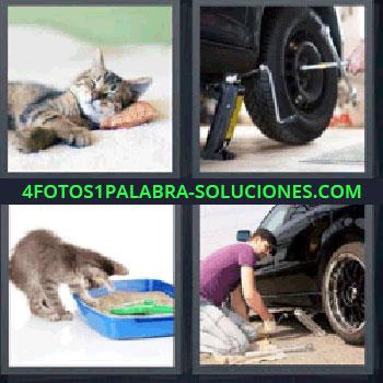 4 Fotos 1 Palabra - rueda, Felino dormido, Rueda, Gato con arena, Chico cambiando rueda a un coche.