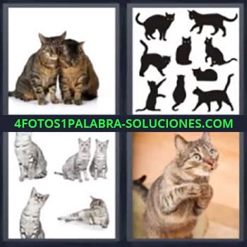 4 Fotos 1 Palabra - muchos gatos o felinos