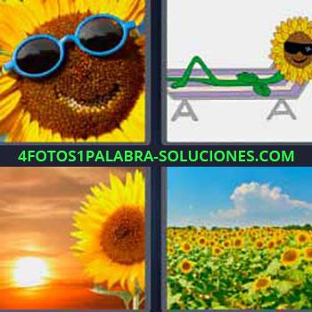 4 Fotos 1 Palabra - ocho-letras flor amarilla con lentes azules. Dibujo flor tumbada en una hamaca. Atardecer. Campo de flores amarillas. Amapolas. Aleluyas amarillas.