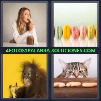 4 Fotos 1 Palabra - seis-letras gato galletas, chica comiendo crema de chocolate, galletas de colores, mono, chango.