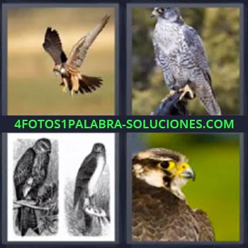 4 Fotos 1 Palabra - cinco-letras aguilas, Aves, Pajaros, Aguila