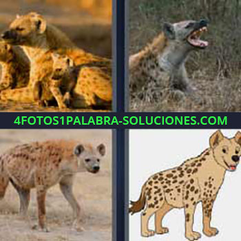 4 Fotos 1 Palabra - ocho-letras felino. Especie de zorro. Animal extraño mamífero. Chacal.