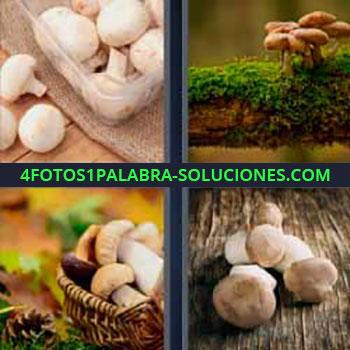 4 Fotos 1 Palabra - seis-letras champiñones. Fotos con diferentes tipos de setas.