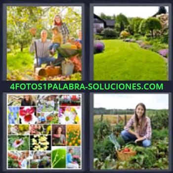4 Fotos 1 Palabra - siete-letras huerta, Cesped, Fotos de flores y plantas