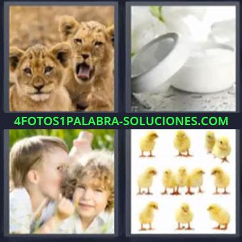 4 Fotos 1 Palabra - seis-letras cachorros de león, Niños cuchicheando, Pollitos
