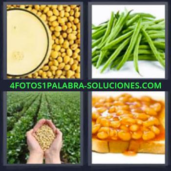 4 Fotos 1 Palabra - cinco-letras garbanzos. Legumbres. Guisantes. Plantacion. Habas. Guisantes. Arvejas