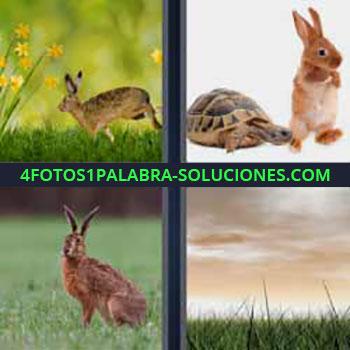 4 Fotos 1 Palabra - cuatro-letras conejo corriendo. Tortuga y conejo. Liebre en el campo. Cielo nublado.