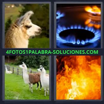 4 Fotos 1 Palabra - siete-letras fuego, animal, fuego cocina, incendio