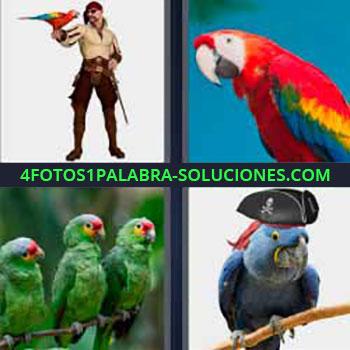 4 Fotos 1 Palabra - papagayo. Pájaro con muchos colores. Guacamayo. Cotorra con sombrero de pirata. Cacatúa.