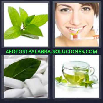 4 Fotos 1 Palabra - seis-letras hierbas, Hierba buena, Chica cepillandose los dientes, Chicles clorofila, Infusión o te