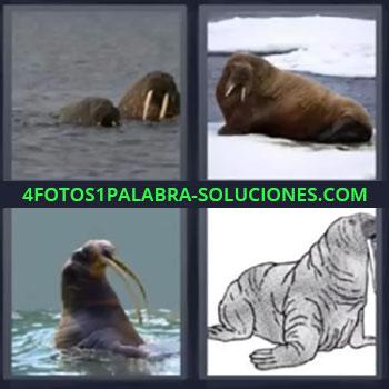 4 Fotos 1 Palabra - seis-letras focas, Leon marino