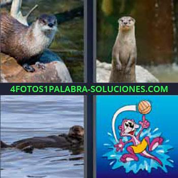 4 Fotos 1 Palabra - seis-letras animal agua. Huillín. Lobito de río. Marsupial. Foca. Morsa pequeña.