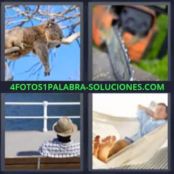 4 Fotos 1 Palabra - cuatro-letras koala sierra. Hombre con sombrero mirando el mar. Señor durmiendo en hamaca. Motosierra. Animal acostado en la rama de un árbol.