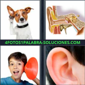 4 Fotos 1 Palabra - Perro escuchando. Imagen oído interno. Niño con embudo como sonotone. Oreja.