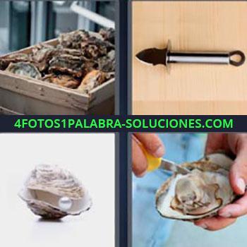 4 Fotos 1 Palabra - moluscos recién pescados en una caja. Concha con perla. Sacando almeja u ostia