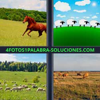 4 Fotos 1 Palabra - siete-letras caballo corriendo. Ovejas y nubes blancas. Ovejas en el campo comiendo. Vacas pastando.