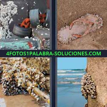 4 Fotos 1 Palabra - siete-letras almejas. Conchas de mar. Caracoles de mar. Roca y océano.