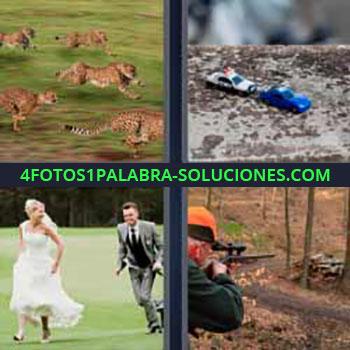4 Fotos 1 Palabra - cuatro-letras leopardos felinos. Coches de juguete. Pareja de novios corriendo. Disparando con rifle.